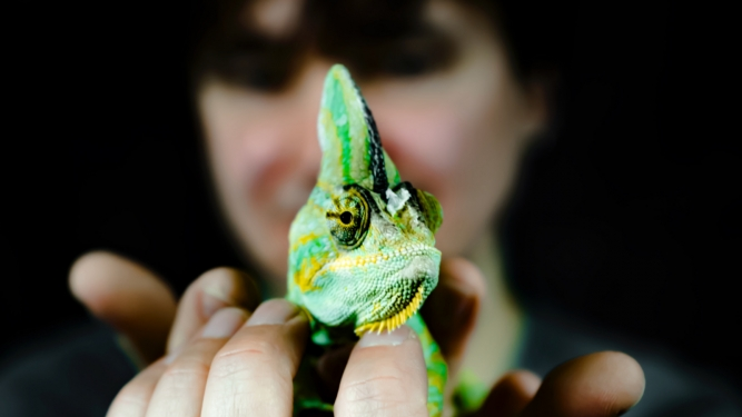 He Chameleon La Spirale Fribourg Billets