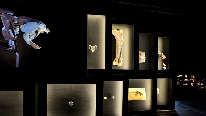 Das Erdzeitalter der Menschen Naturhistorisches Museum Bern Bern Tickets