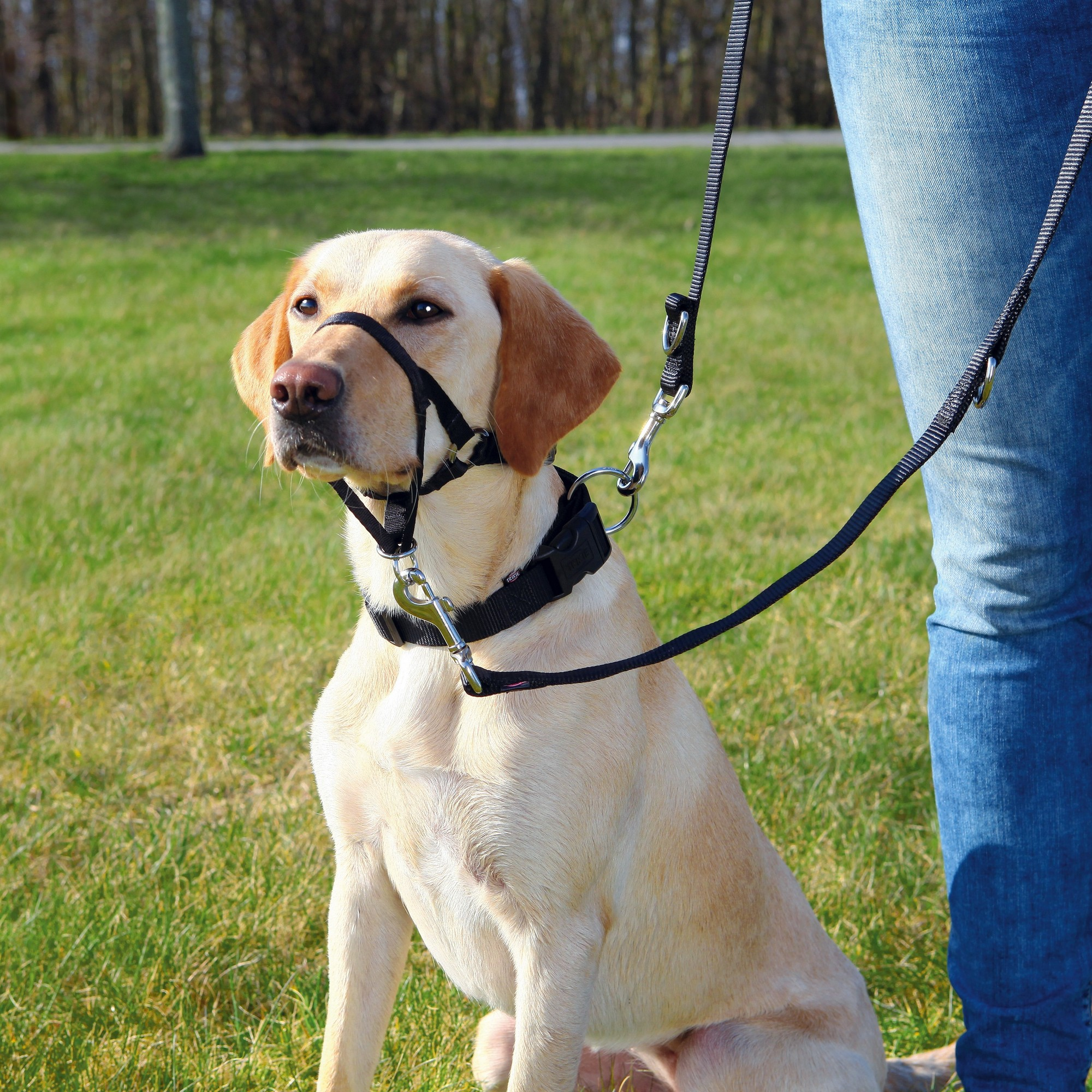 Trixie-Top-Trainer-Harnais-d-039-entrainement-pour-chien-TX103 miniature 4