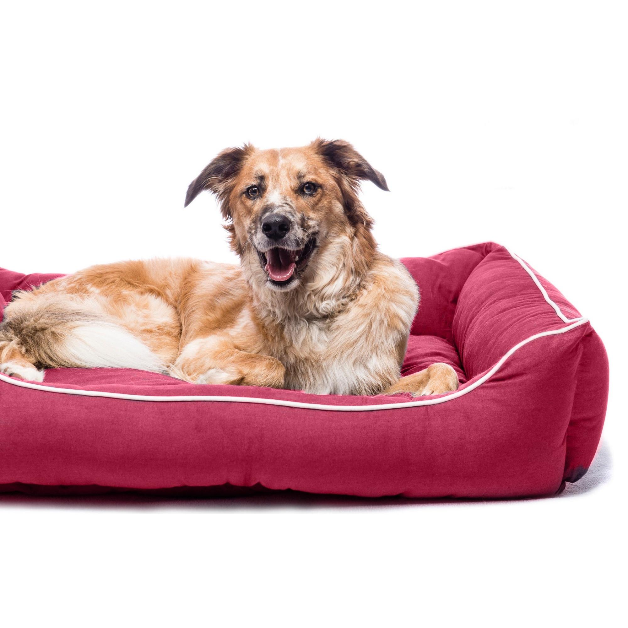 Dog Gone Smart Lounger Dog Bed Vp345 Ebay