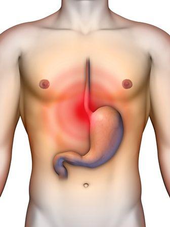 Anatomia - brzuch i miednica test