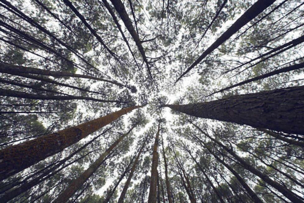 Iswanto arif trees_opt