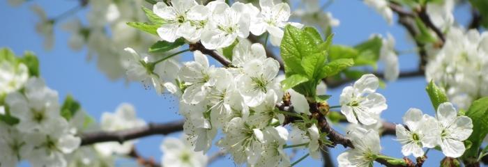 Marta vidus pavasara vēsmas