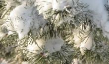 Janvāris gaidāms mitrs, silts un nepastāvīgs, arī decembris aizvadīts ar siltu un mitru laiku.