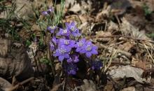 Pavasara krāsas