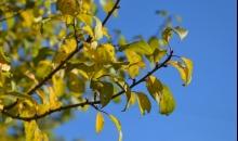 Kad rudenī iezogas pavasaris...