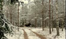 Sniegotais novembra sākums.