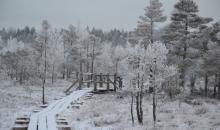 Sarmota ziemas diena purvā