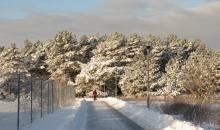 Ziemas ainavas