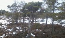 Melnā ezera un Cenas purvā