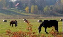 Oktobris, zirgi, svētdiena.
