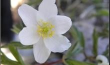 Pavasaris Rīgā