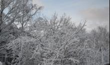 Nedēļa sniega