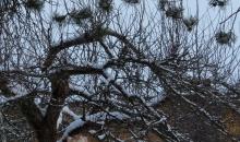Sniegota janvāra diena