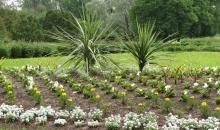 Ieskats botāniskajā dārzā