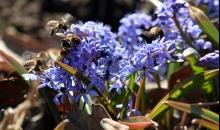 Pavasaris Vecpiebalgā