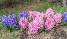 Skatiens pavasarī