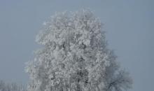 Laikapstākļi un daba janvāra otrajā pusē