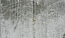Putenis, atkusnis un ziemas atgriešanās