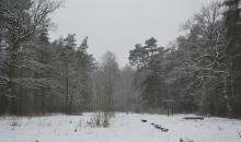 Pelēki liegā ziema...