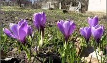 Pavasara atnākšana