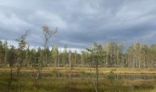 Mežs un sēnes - viss notiek! :)
