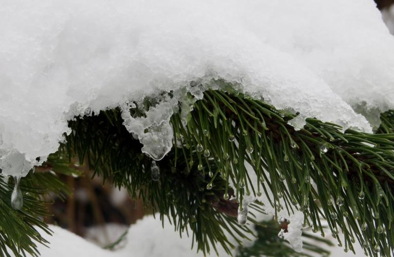 """Sniega kļuvis mitrs un smags, vērojami masveida """"noslīdeņi"""" no kokiem un māju jumtiem."""