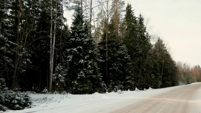 Meža ceļi (īpaši ēnainajās vietās) šodien vēl izskatās ļoti ziemīgi. Vēl neizkusušajām sniega paliekām pa virsu sagūlis vakardienas jaunais baltumiņš.