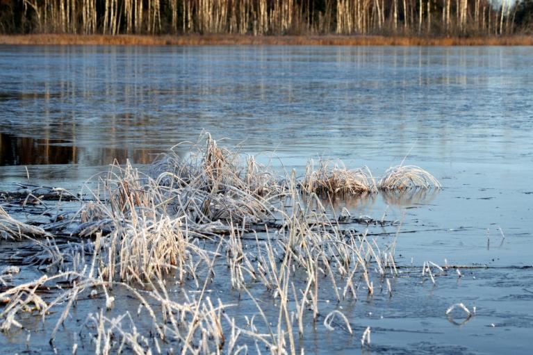 """Autors: muntis. Vecpiebalga, 10.11.2012. Drīz būs pirmie """"bļitkotāji""""."""