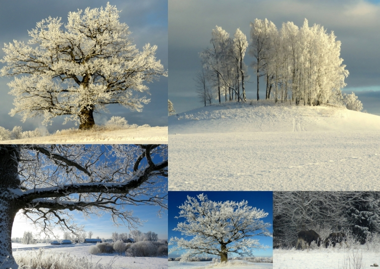 Janvāris. Aukstākais rīts 08.01. -29°, siltākā diena 28.01. +6°.