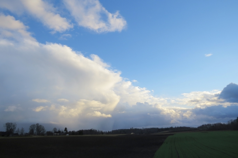 Zaļie ziemāji liek domāt par pavasari...