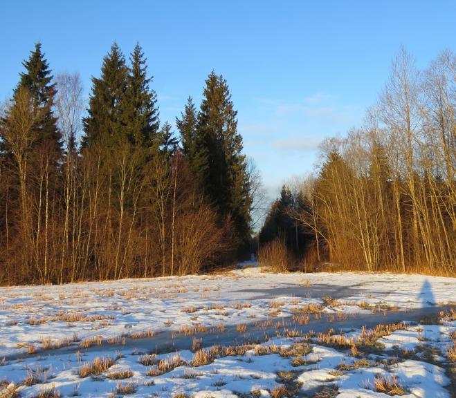 Uz lauka sniegs gandrīz viss nokusis, bet mežā tā vēl gana daudz.