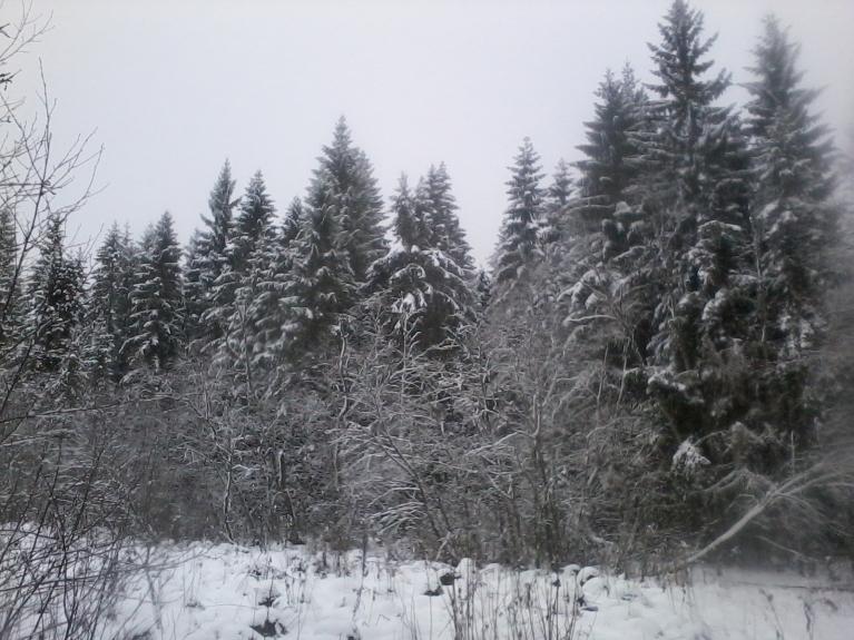15. februāra rīts, naktī piesniguši klāt daži cm svaiga slapja sniega.