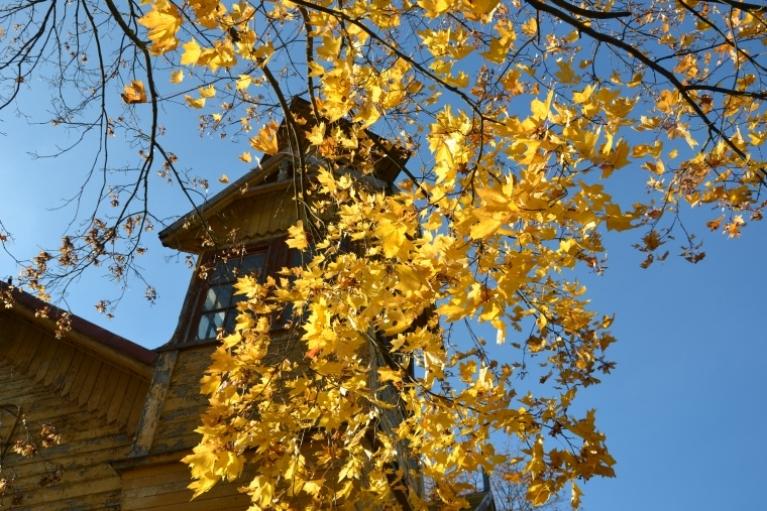Pārdaugavas īpašais rudens.