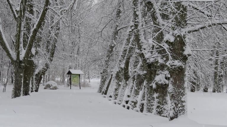 Foto: Migla. 9. janvāra rīts. Vidējais sniega biezums 11 cm