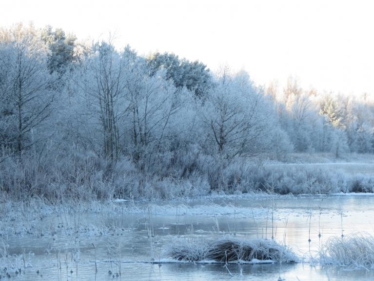 Ekskursiju noslēdzu ezera krastā, kur jūras pusē esošie koki vēlreiz norāda uz ziemas krāšņajiem skatiem