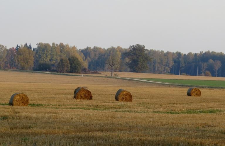 Lauku ainavā dominē dzeltenā un brūnā krāsa, kā arī ziemāju zaļais tonis.