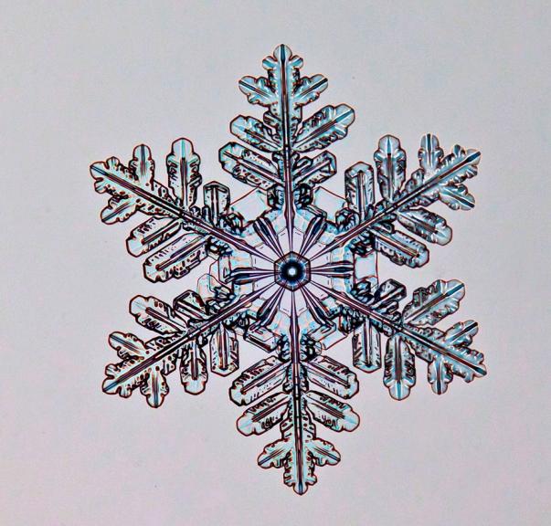 Sniegpārsliņa Rīgā, 24. februāra rītā