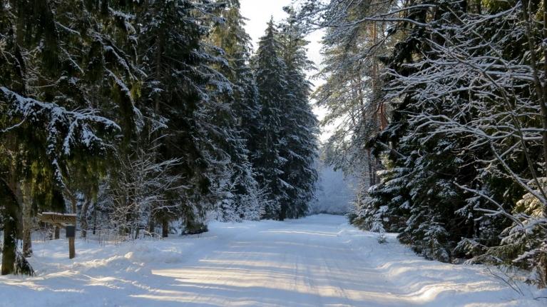Meža ceļi patreiz burvīgi, nevaru neapstādināt mašinu, lai nofotogrāfētu.