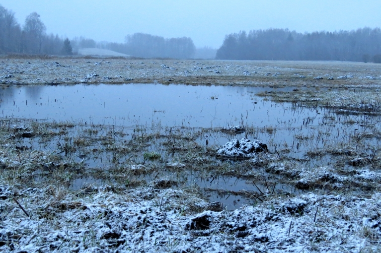 11. janvārī slapjā pļava uz neilgu laiku iekrāsojas baltāka.