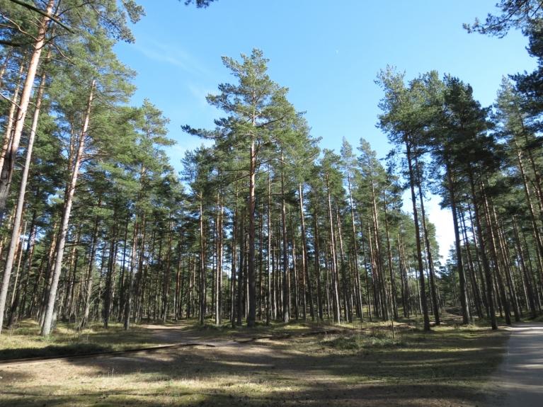 Brīnišķīgo laiku varēja izbaudīt, dodoties klusās meža pastaigās