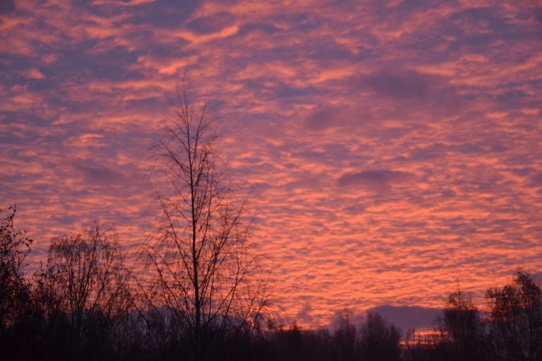 Lūk, tik gleznaini mākoņi bija šorīt pirms saullēkta.