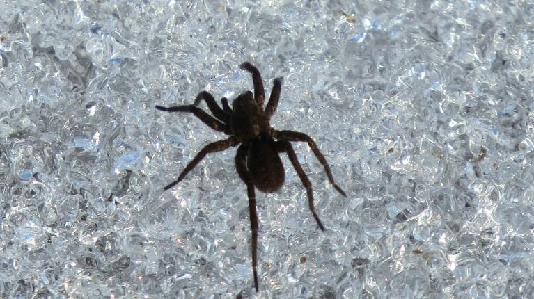 Pa pakusušo sniegu ātri aizsteidzas melns zirneklītis, virs galvas lidinās raibs tauriņš, kuru gan nepagūstu iemūžināt.