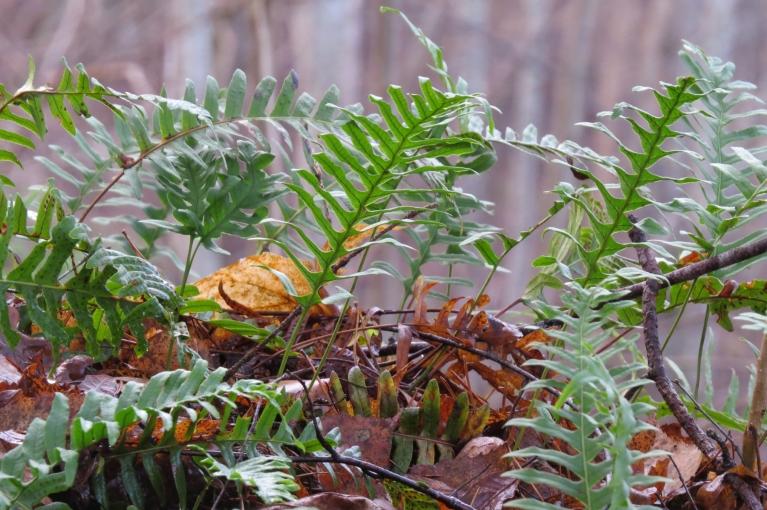 Meža vēl daudz zaļās krāsas...