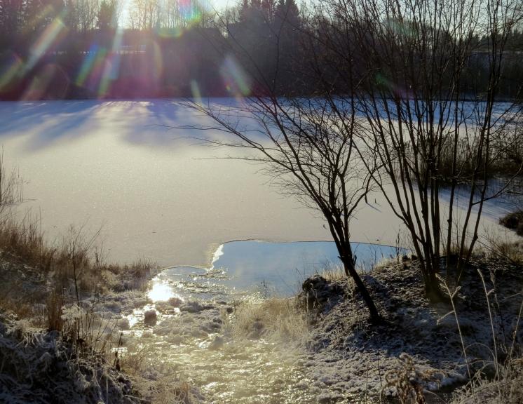 Uz dīķiem izveidojusies pabieza ledus kārta (spriežot pēc bļitkotāju daudzuma).