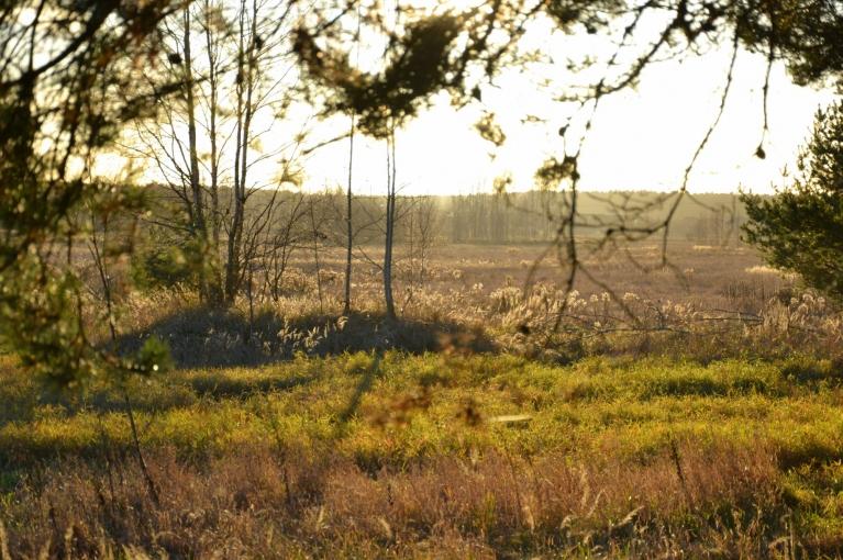 11. novembris - Lāčplēša diena - izdodas silta un saulaina, kā radīta pastaigām.