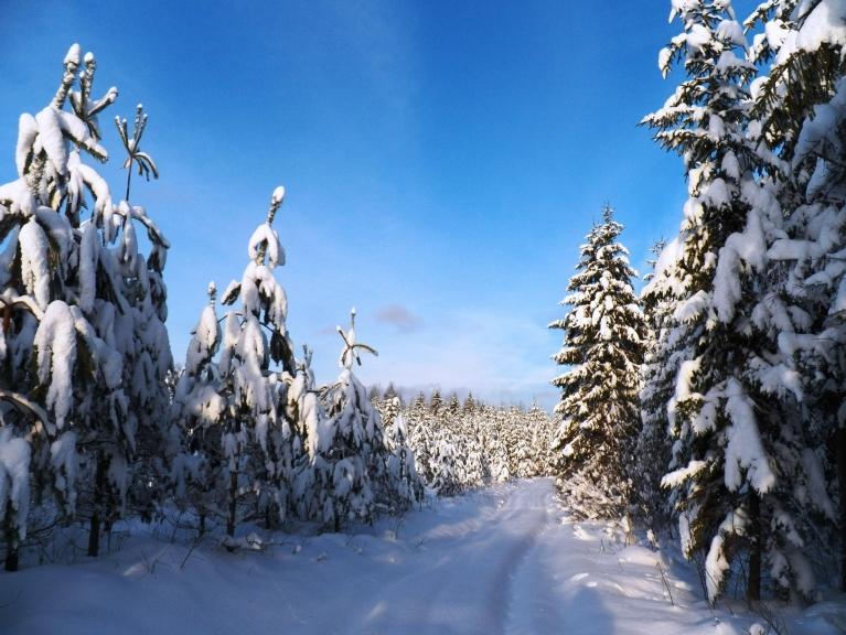 Latvijā snieg un puteņo, bet Žīguru mežos idillisks klusums un miers