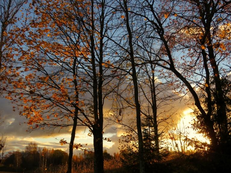 Vējš pa nakti plēsis kokiem rudens rotu, bet kaut kas no lapu vainaga vēl saglabājies.