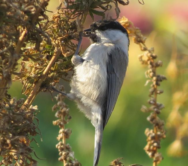Dārzs pilns ar mazajiem putniņiem.