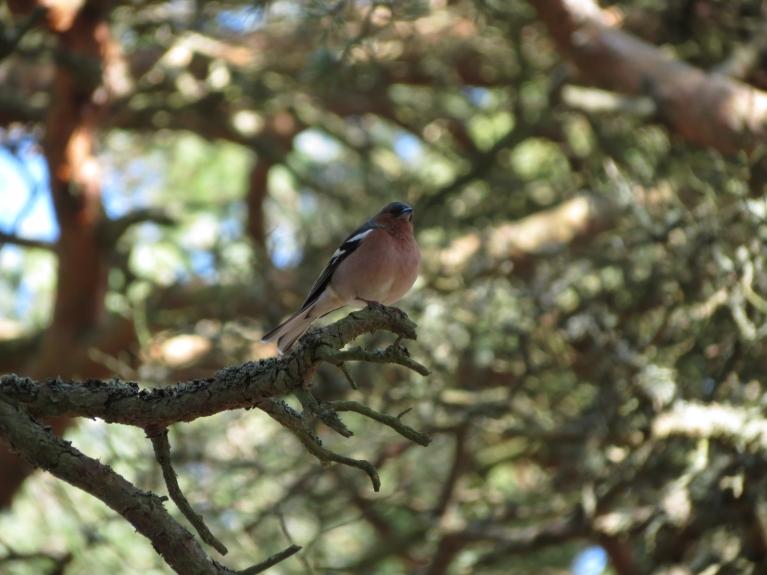 Visapkārt dzird putnu dziesmas